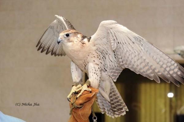 abu dhabi falcon hospital @lemonicks.com