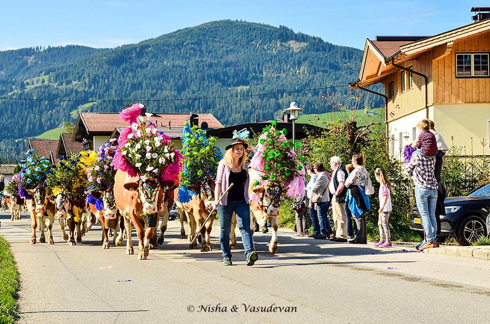 almabtrieb alpine cow festival @lemonicks.com