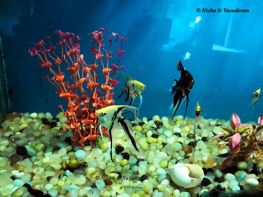 aquarium Saputara @lemonicks.com