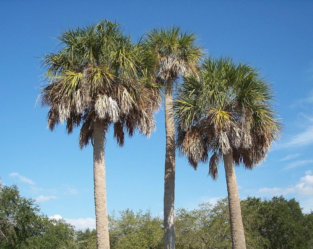fun facts about florida