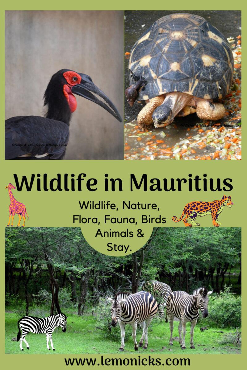 PIN Wildlife in Mauritius @www.lemonicks.com