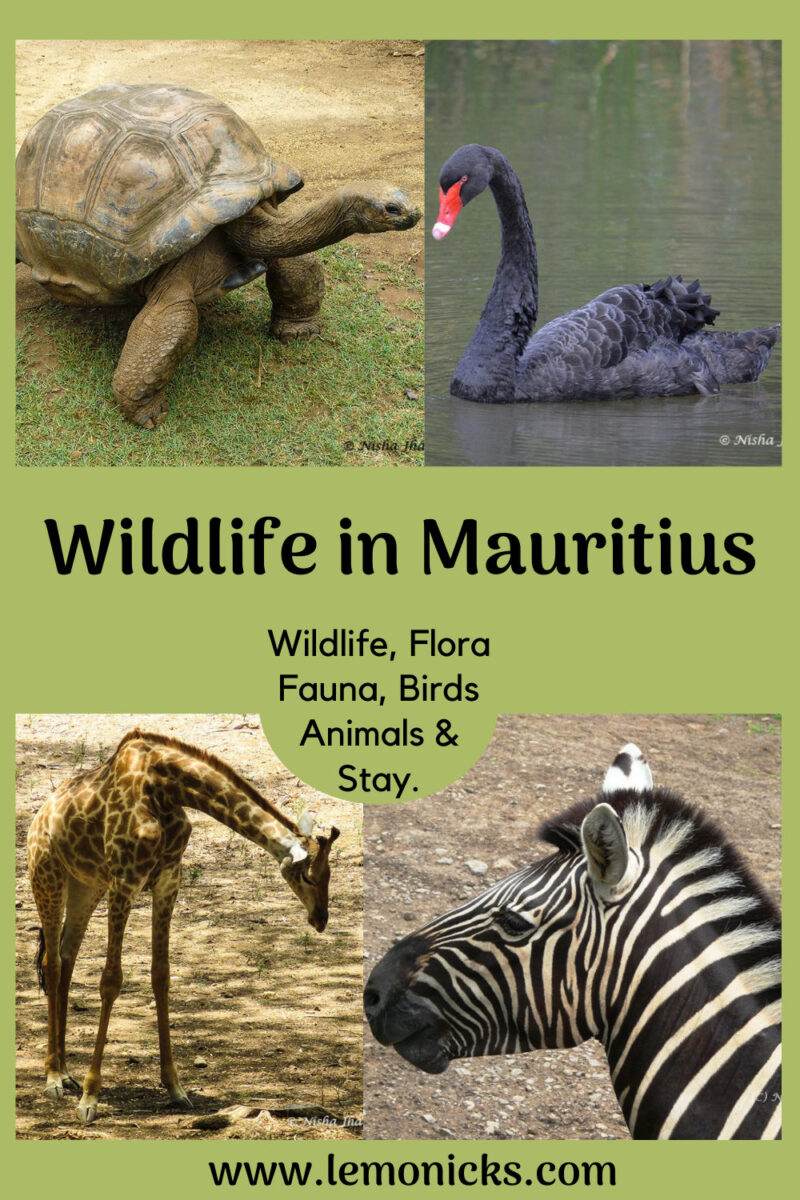 Wildlife in Mauritius @www.lemonicks.com